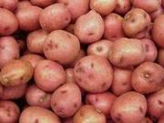 Мы готовы предложить крупные поставки картофеля урожая 2011 года