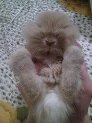 кролик+клетка