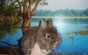Карликовые МИНИ кролики Привиты От Заводчика У нас самые маленькие!!!!