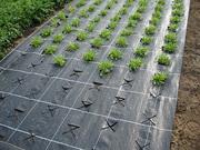 Агроткани для сада и огорода