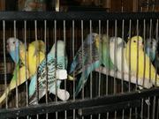 Большой выбор попугаев