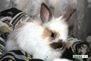 приму в дар или куплю не дорого декоративного кролика