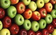 Продаем высококачественные сорта яблок,  выращенные в Беларуси