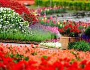саженцы,  цветы,  семена собств.производства и ведущих произв. Европы