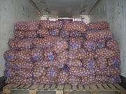 овощи оптом из Беларуси