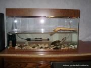 продам красноухую черепаху+аквариум