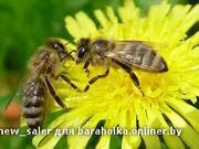 Пчёлы,  рои.