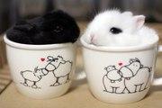 Кролики МИНИ в Минске