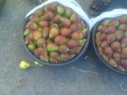 Овощи фрукты из Узбекистана поставляем рефрижератор фурами