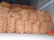 Картофель в больших объемах. Куплю.