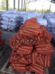 Морковь крупным оптом!