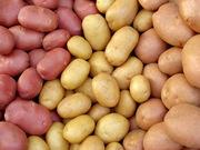 Семенной картофель различных сортов и репродукций. От 15 росс.руб.