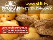 Семенной картофель из Беларуси оптом