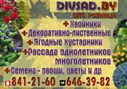 Посадочный материал для благоустройства Саженцы,  Рассада и др. Оптом и