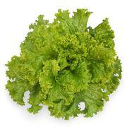 Семена салата KS 129 (Китано)