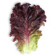 Семена салата КS 101 (Китано)