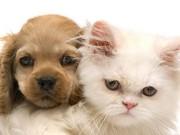 Добровольное страхование животных