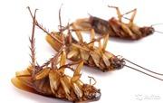 Травля тараканов,  мышей,  клопов.