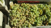 Продам охлажденный виноград из Молдовы