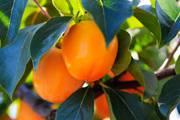 начался новый сезон фруктов  Испании