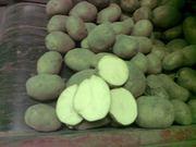 Картофель урожая 2015 г оптом