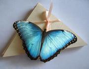 Салюты из живых бабочек
