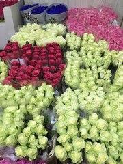 Цветы Оптом (розница) из Голландии,  Кении и Эквадора