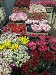 Цветы Оптом (розница) Минск
