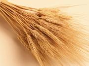 Продаю пшеницу фуражную,  25 тонн