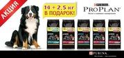 Акционные упаковки PRO PLAN 14+2, 5 кг в подарок