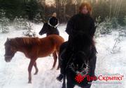 Катание на лошадях. Агроусадьба