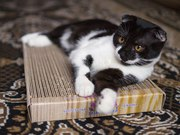 Новое поколение когтеточек-лежанок для кошек в Минске.