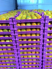 Арбузы,  дыни,  помидоры,  огурцы,  баклажан,  цитрусовые,  ягоды.,  яблоки.