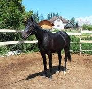 Продам лошадь для верховой езды