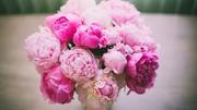 Цветы (розы,  хризантемы,  гвоздики,  тюльпаны...