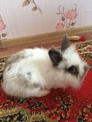 Продаю декоративных милых крольчат (белый)