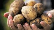 Деревенские ништяки (продукты питания)Картофель свой
