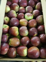 Яблоки от производителя оптом