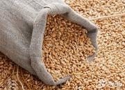 Зерно фуражное. Продаем по выгодной цене.