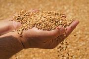 Организация реализует зерно.