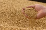 Закупаем зерно фуражное по всей РБ.