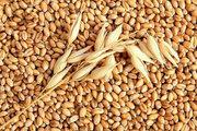 Закупаем зерно фуражное Пшеница