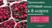 Тюльпаны по низким ценам!