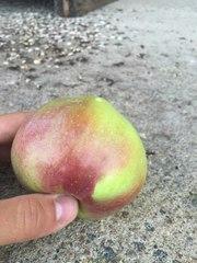 Белорусские яблоки оптом