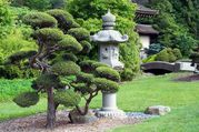 Сформируем стиль ниваки из хвойных растений,  растущих на вашем участке