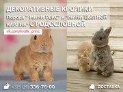 Декоративные кролики с родословной в Минске