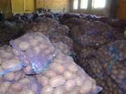 Картофель оптом - калибр 5+ от производителя