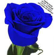 Синие розы купить в Минске