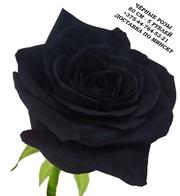 Чёрные розы купить в Минске