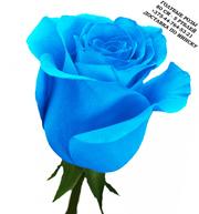 Голубые розы купить в Минске